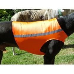 Windhund Warn-, Renn- und Tobeweste in orange, 5 Größen lieferbar